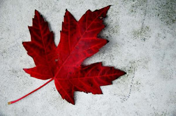 LTL OFFICES CLOSED, JULY 1 - CANADA DAY